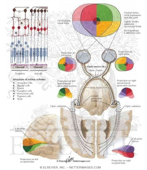 anatomy and physiology of wine tasting   WINE FOR SOUL